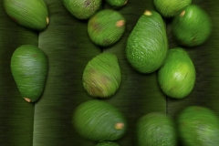 Aongatete_avocados_pack-8-of-20